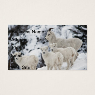 Happy Sheep Family Business Card