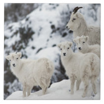 Happy Sheep Family Ceramic Tile