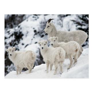 Happy Sheep Family Postcard