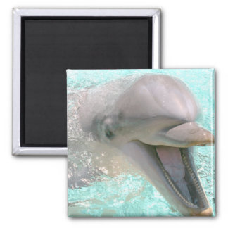 Happy Smiling Dolphin Refrigerator Magnets