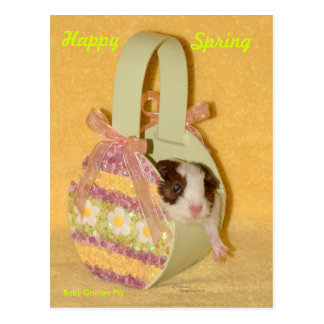 Happy Spring Baby Guinea Pig Postcard