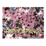 Happy Spring Pink Blossoms Postcard