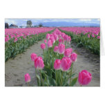Happy Spring Pink Tulips Greeting Card
