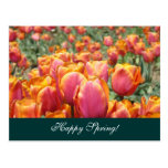 Happy Spring! postcards Colorful Tulip Flower