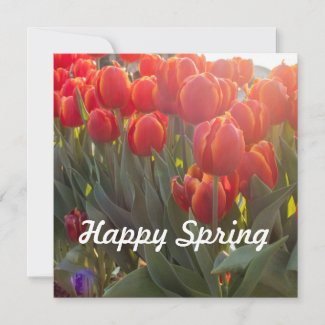 Happy Spring red tulip flowers in the garden Card