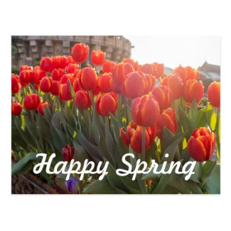 Happy Spring red tulip flowers in the garden Postcard
