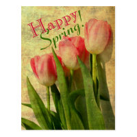 Happy Spring Tulips Postcards