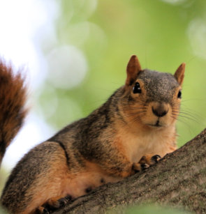 Happy Squirrel Shower Curtain