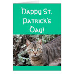 Happy St. Patricks day cat greeting card