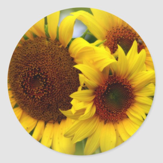 Happy Sunflowers Classic Round Sticker