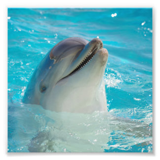 Happy Swimming Dolphin Photo Print