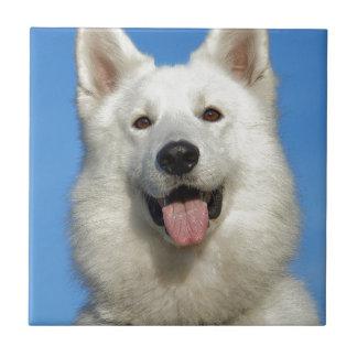 Happy Swiss Shepherd dog Tiles