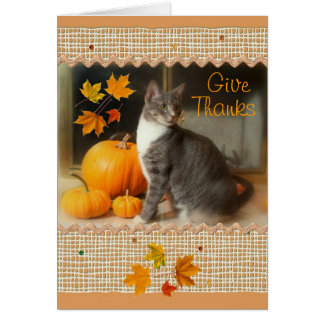 Happy Thanksgiving Card with Cat and Pumpkins