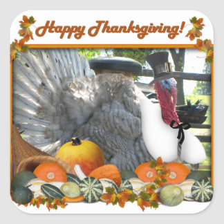 Happy Thanksgiving from Tom the Pilgrim Turkey Square Sticker