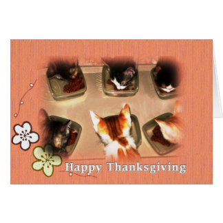 Happy Thanksgiving Kittens Card