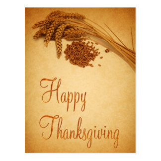 Happy Thanksgiving Wheat - Postcard