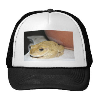 Happy Toad Hats
