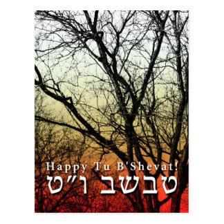 Happy Tu B'Shevat! : Jewish Arbor Day Postcard