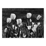 Happy Tulips Black and White Greeting Card