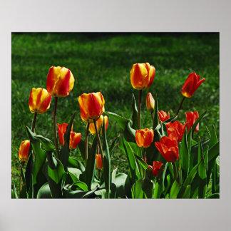 Happy Tulips Poster