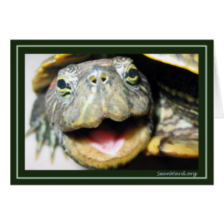 Happy Turtle Card