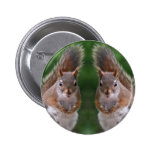 Happy Twins Day, Red Squirrel Humor, Cute and Pers Pins