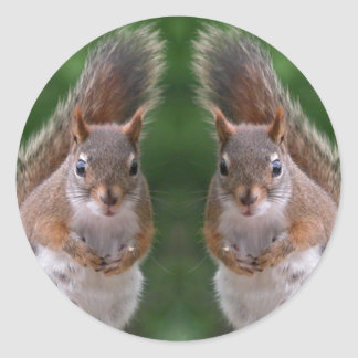 Happy Twins Day, Red Squirrel Humor, Cute and Pers Classic Round Sticker