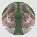 Happy Twins Day, Red Squirrel Humor, Cute and Pers Stickers