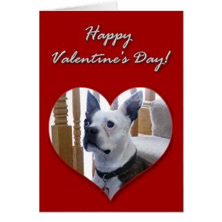 Happy Valentine's Day Boston Terrier card