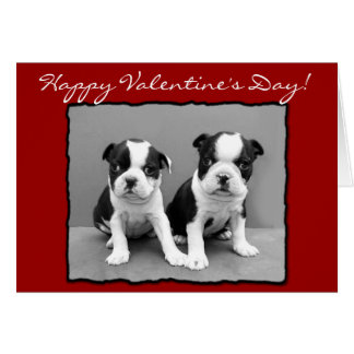 Happy Valentine's Day Boston Terrier Greeting Card