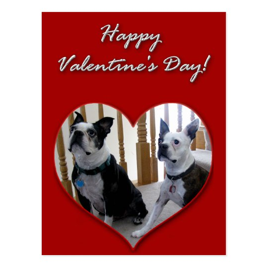 Happy Valentine's Day Boston Terriers card