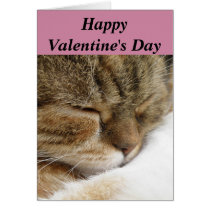 Happy Valentine's Day Cat Card