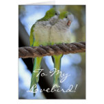 Happy Valentines Day Funny Cute Parrots Card
