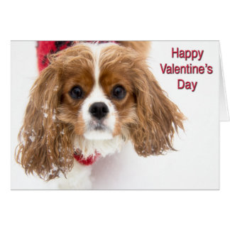 Happy Valentine's Day Sowny Cavalier King Charles Card