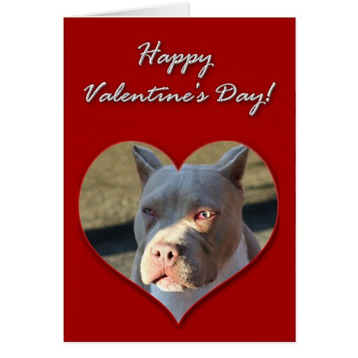Happy Valentine's Day Staffordshire Terrier card