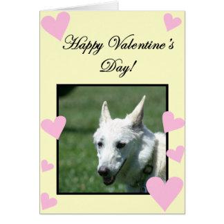 Happy Valentine's Day White German Shepherd card