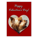 Happy Valentine's Day Yorkshire Terrier Card
