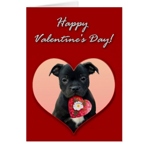 Happy Valentine's Staffordshire Bull Terrier  Card