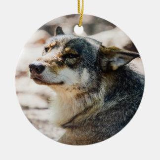 Happy Wolf Portrait, Animal Photography Ceramic Ornament