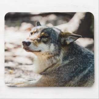 Happy Wolf Portrait, Animal Photography Mouse Pad