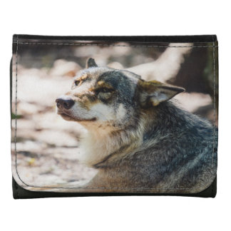 Happy Wolf Portrait, Animal Photography Wallet