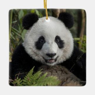 Happy young panda, China Ceramic Ornament