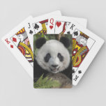 "Happy young panda, China Playing Cards<br><div class=""desc"">China,  Chengdu,  Chengdu Panda Base. Portrait of young giant panda. 