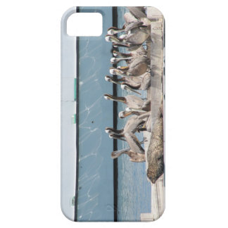 Harbor Friends iPhone 5 Covers