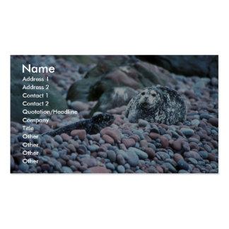 Harbor seal and pup on Buldir Island Business Card