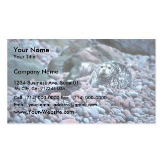 Harbor seal and pup on Buldir Island Business Cards