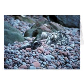 Harbor seal and pup on Buldir Island Cards