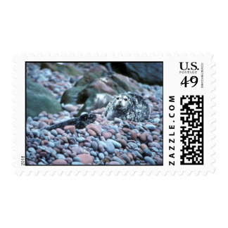Harbor seal and pup on Buldir Island Stamps