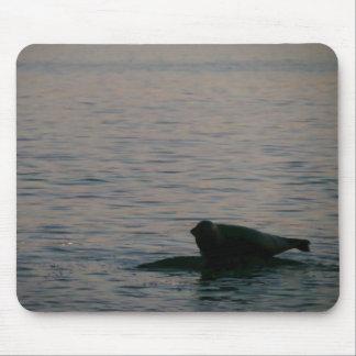 Harbor Seal at Dusk Mouse Pad
