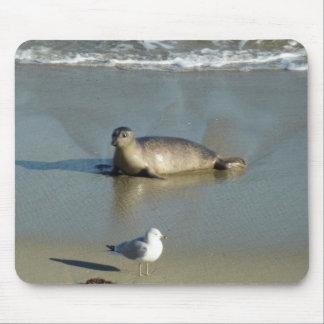 Harbor Seal at La Jolla California Mouse Pad
